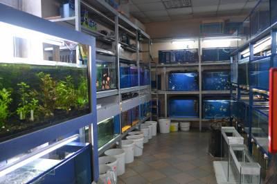 выставка рыбок кривой рог